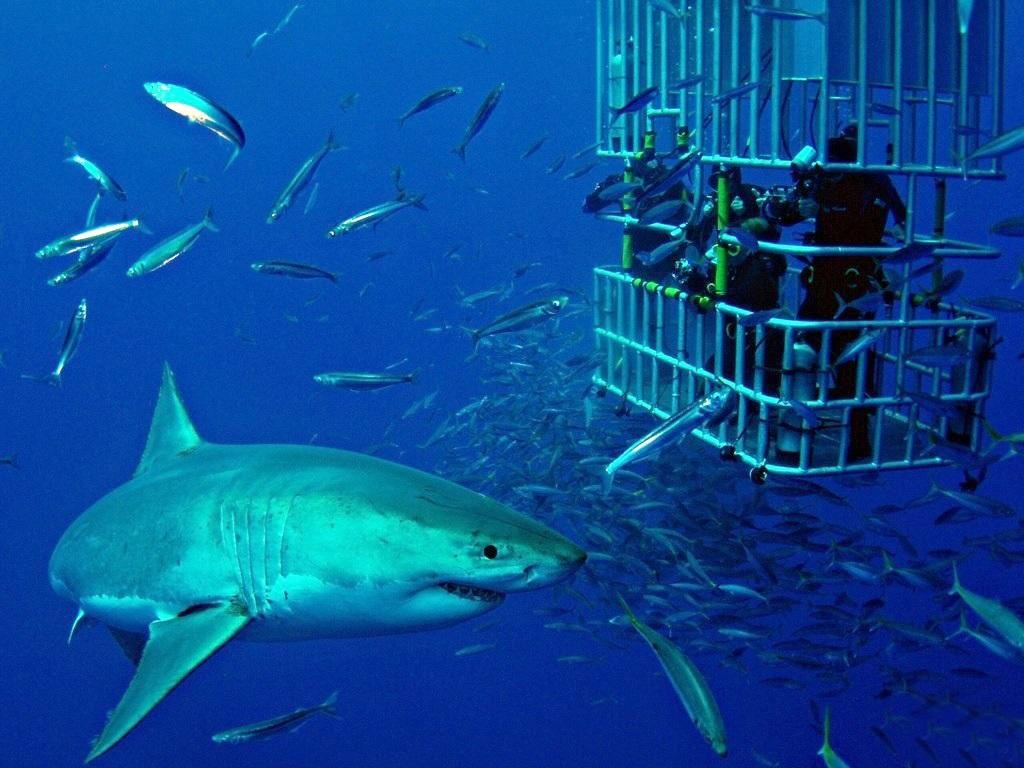 SHARKS IN PHUKET - HOW TO PROTECT YOURSELF?