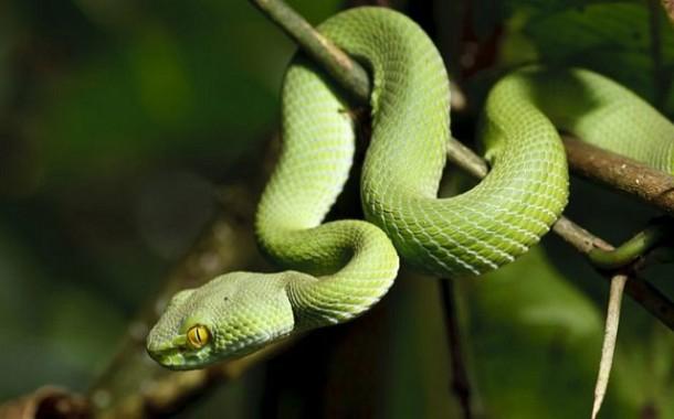 Как не стать жертвой змеиного укуса