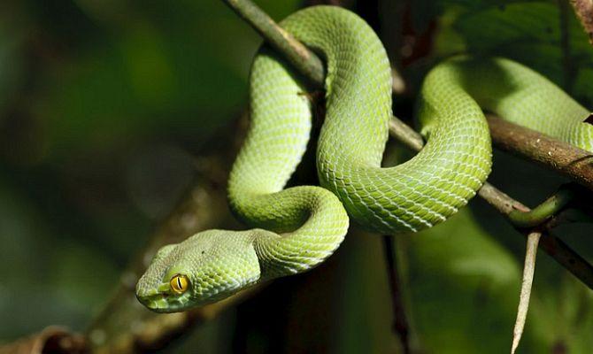 Змеи Тайланда - как не стать жертвой змеинного укуса
