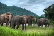 Животные Таиланда - почитаемые, редкие, удивительные и опасные