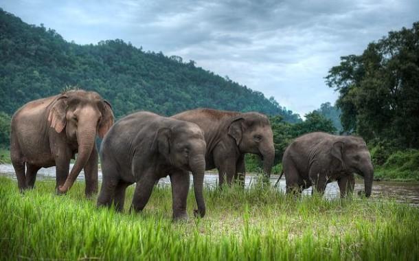 Животные Таиланда - почитаемые, редкие, и опасные