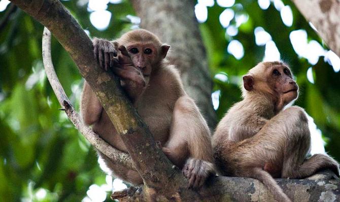 Дикие обезьяны