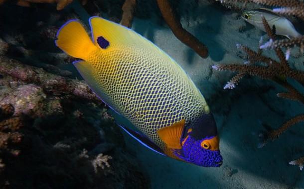Рыбы Тайланда: каких можно есть, а какие съедят вас