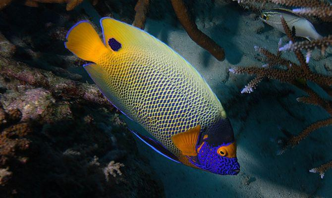 Рыбы Тайланда -  рыбалка и уникальные представители подводного мира