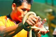 Змеиная ферма в Паттайе - чудеса тайской медецины, змеиное шоу и его секреты