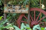 Сад бабочек и музей насекомых на Самуи
