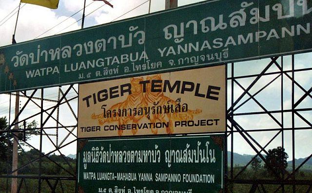 U-hrama-V-Katchaburi-tigrov