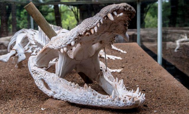Музей на крокодиловой ферме