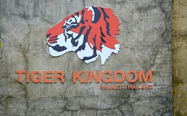 Королевство тигров на Пхукете (Tiger Kingdom Phuket)