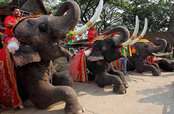Слон в Тайланде - священное животное и символ страны
