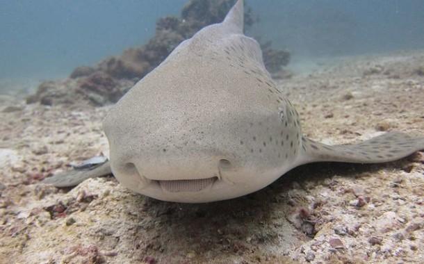 Акулы на Пхукете - как обезопасить себя?