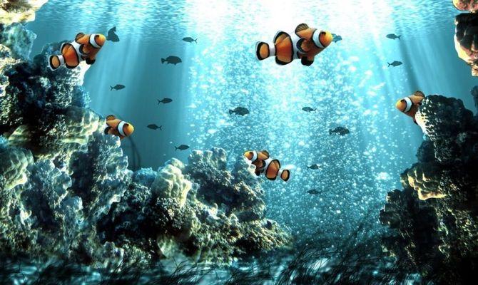 ปะการัง Redang Mashrum