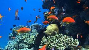 """Anba dlo obsèvatwa """"Coral Mondyal"""" nan Eilat"""