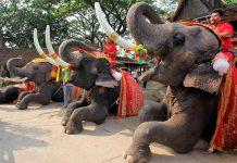ELEPHANT IN THAILAND — THE SACRED ANIMAL AND THE SYMBOL OF THE COUNTRY