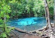 THE EMERALD POOL AND THE BLUE LAKE IN KRABI