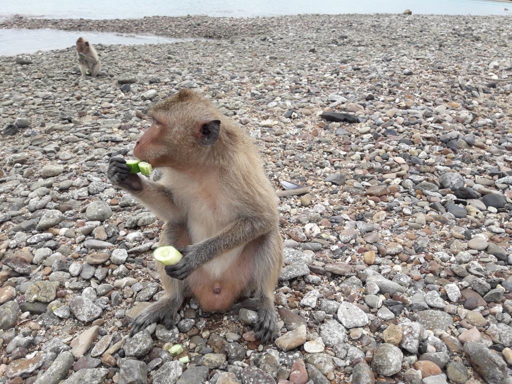 Остров обезьян в Паттайе