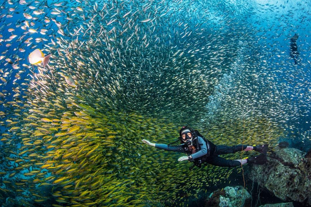 Дайвинг у островов Таиланда