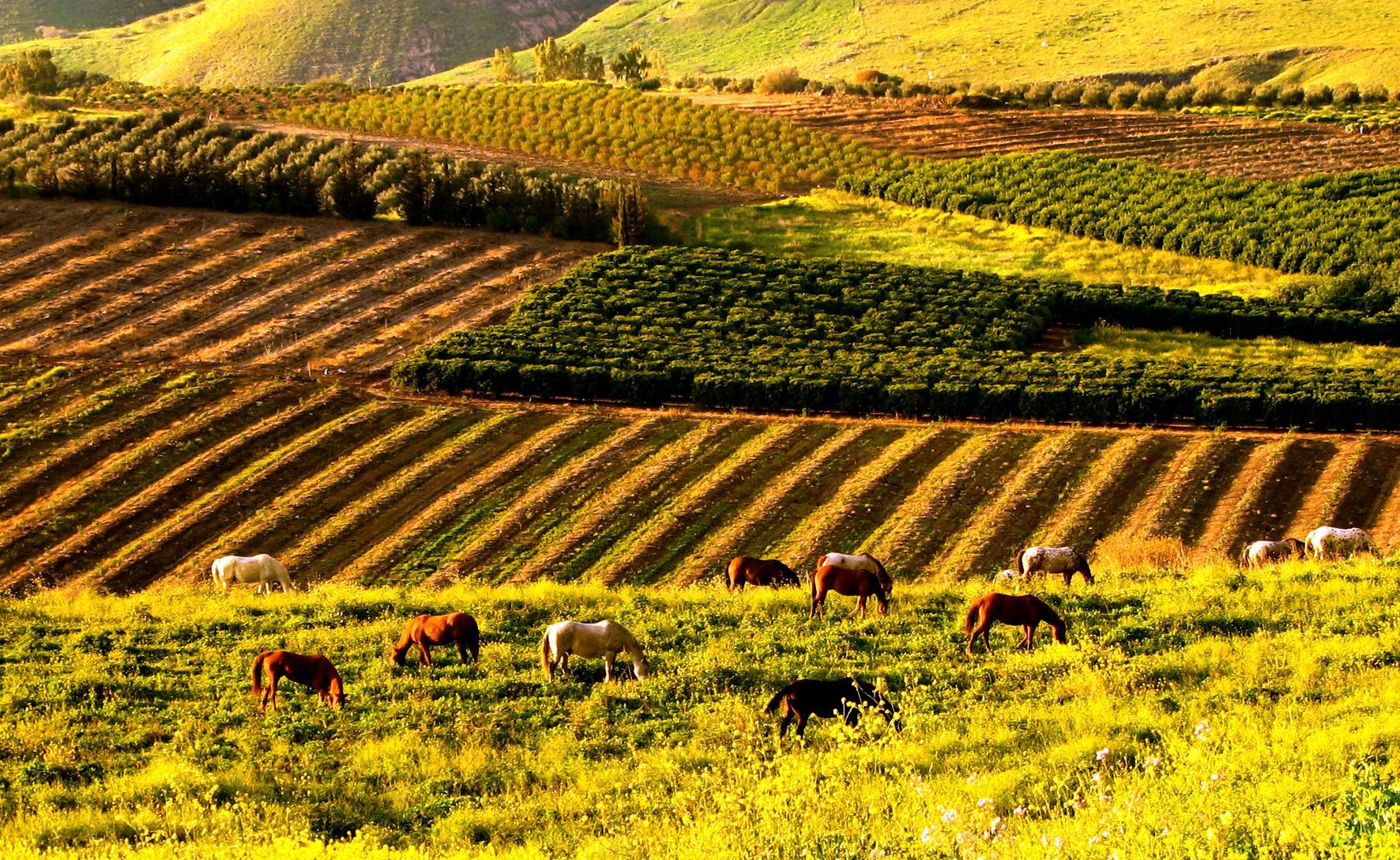 Израиль сельское хозяйство