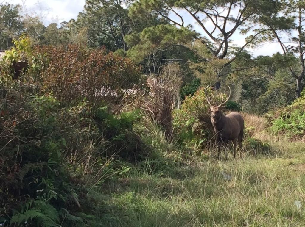 Дикая природа в Phu Kradueng National Park