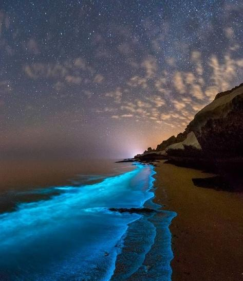 Bioluminescent Plankton Beach