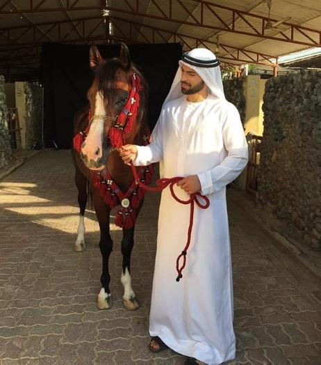 Dubai City Stable