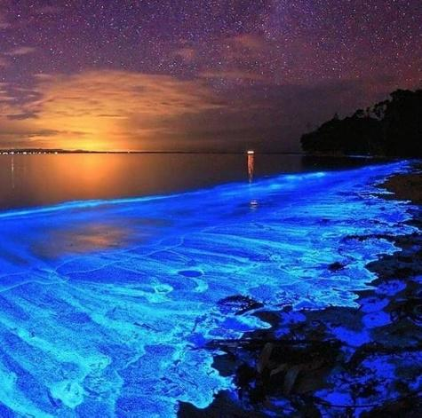 Bioluminescent Beach