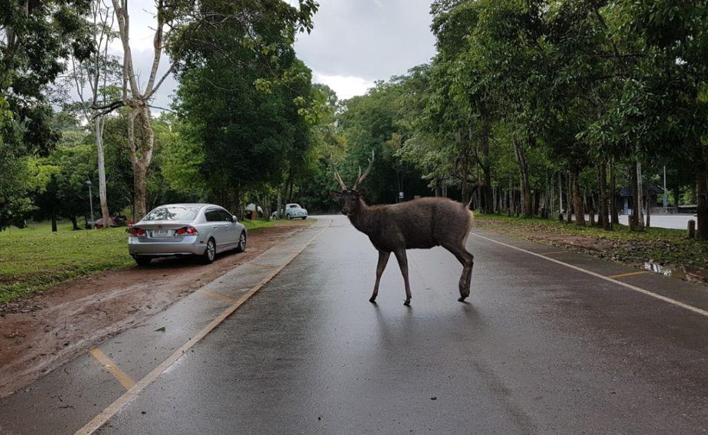 Животные в Khao Yai