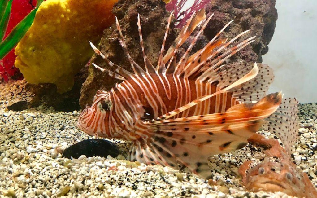Team ECCO Aquarium & Sharp lab