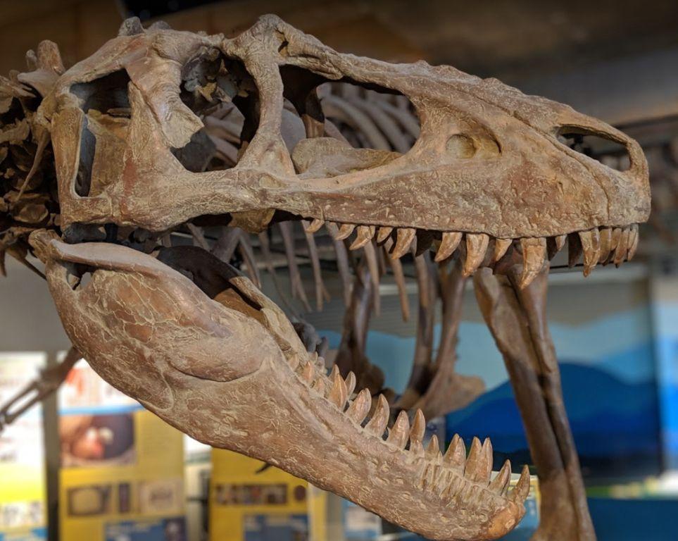 พิพิธภัณฑ์วิทยาศาสตร์แอชวิลล์