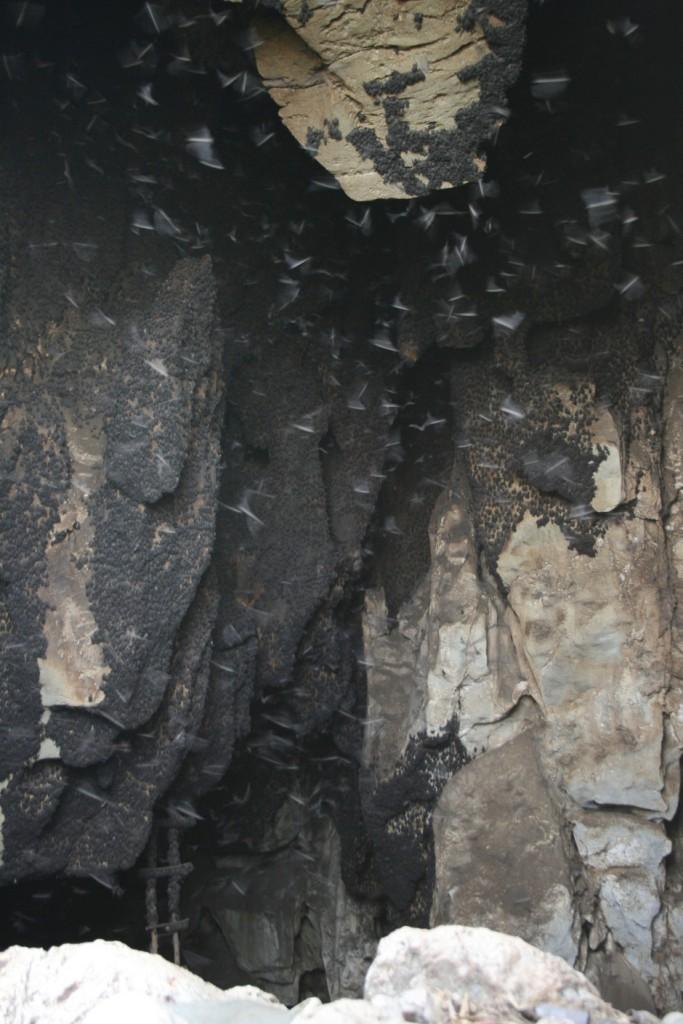 Khao Luk Chang Bat Cave