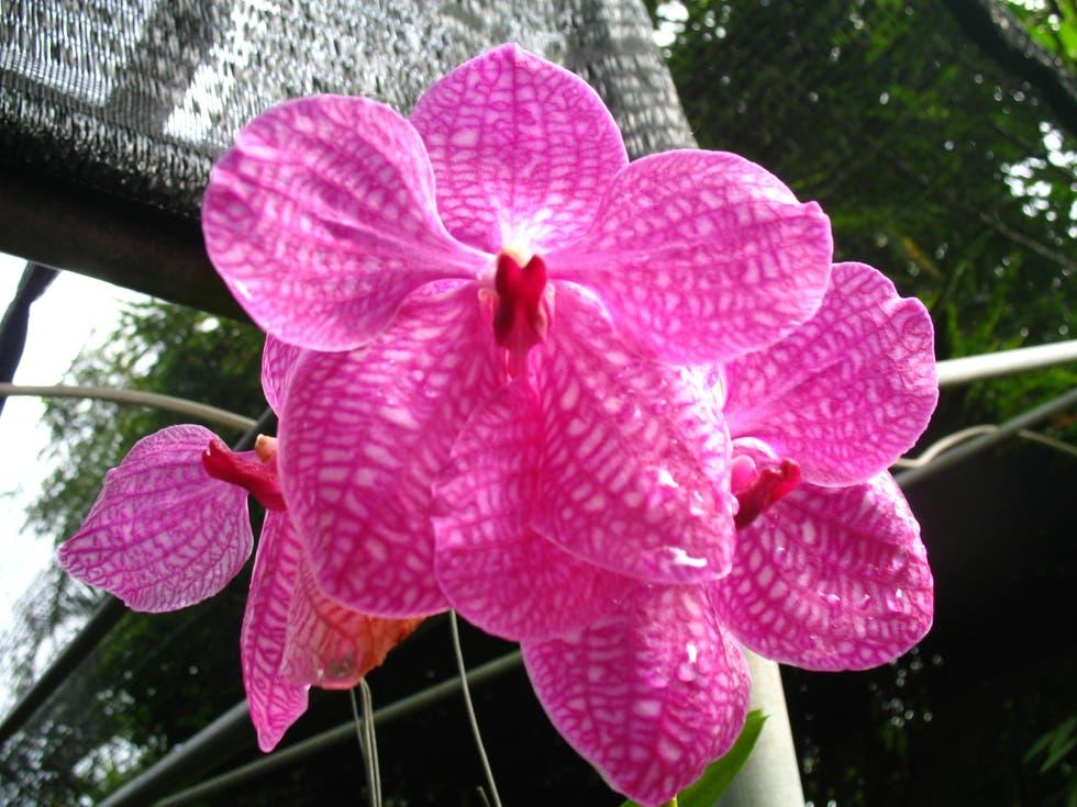 Sai Nam Phung Butterfly Farm and Orchid Nursery