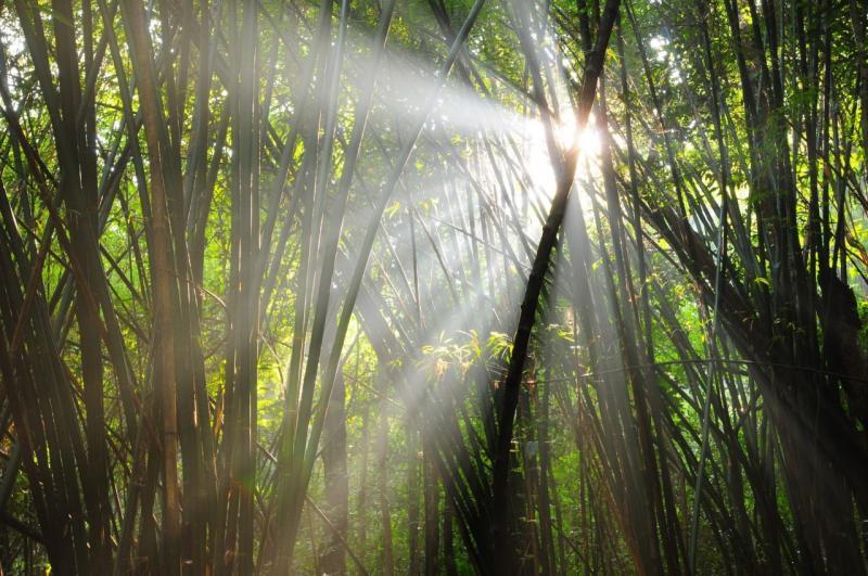 Nam nao bamboo
