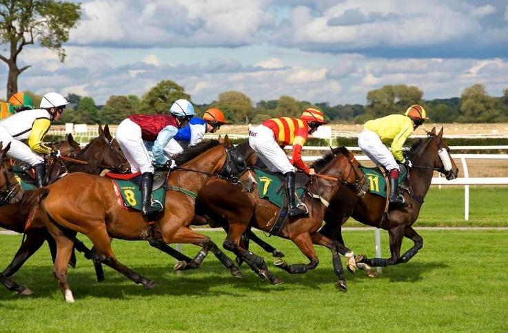 Betting in Sports and Races