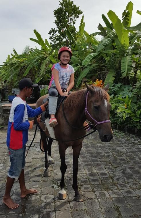 ม้าเกาะบาหลี