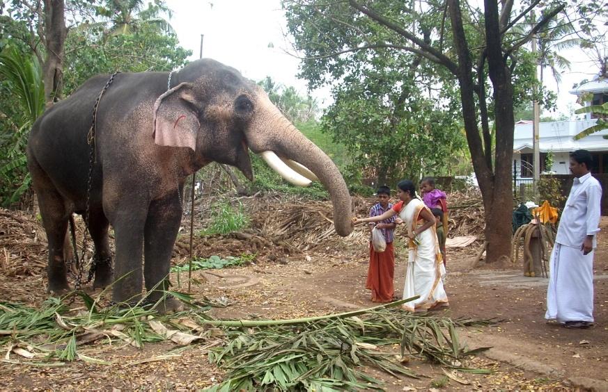 elephant kerala