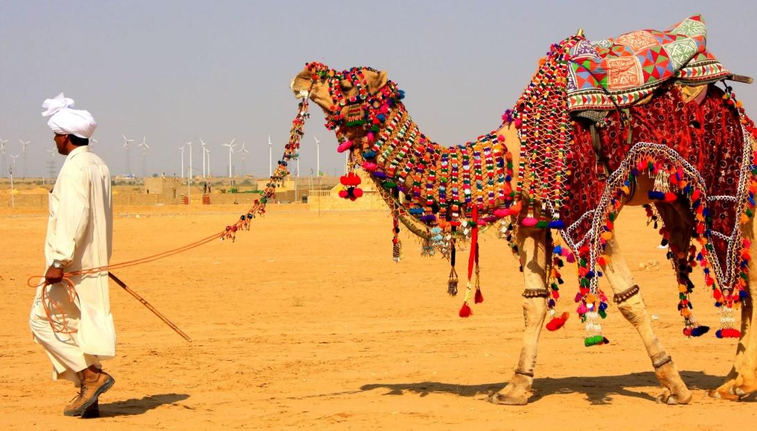 Camel Rajasthan
