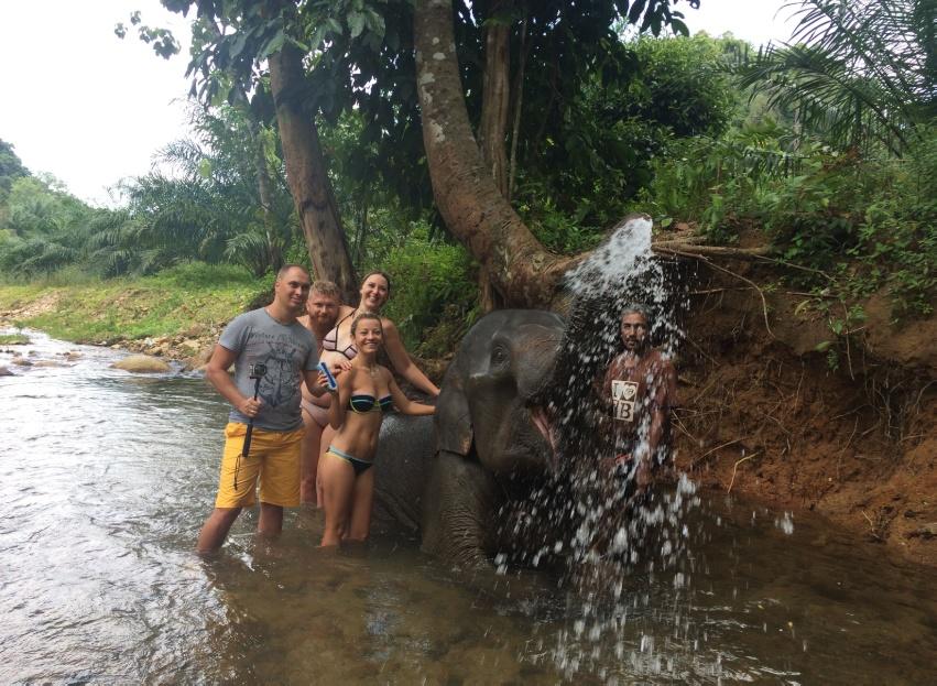 ช้างซาฟารี