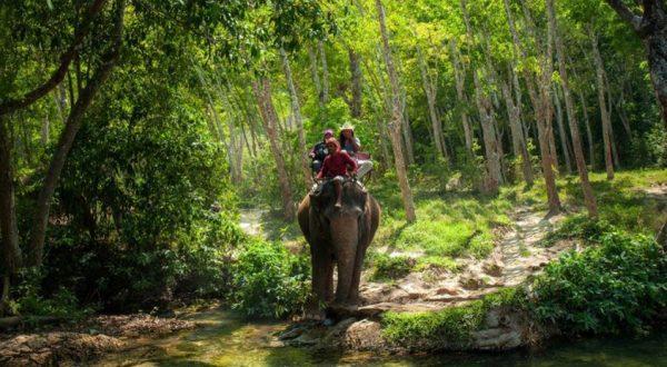 Elefan safari