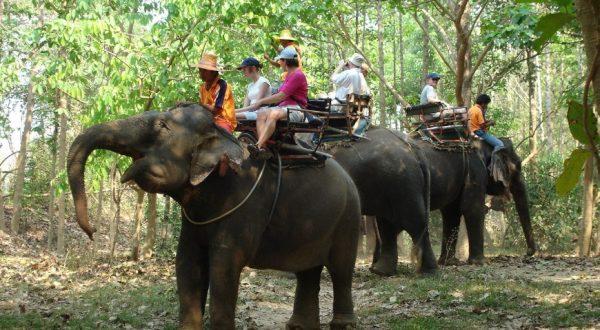 Elephant fèm