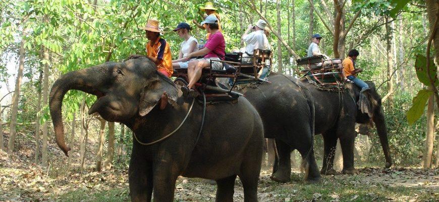 Fil təsərrüfatı